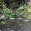 Waterfall with Plants and Trees in Crystal Springs Rhododendron Garden Spring Season in Portland Oregon 1080p — Stock Video