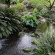 Stock Video: Ferns and Hostas along Creek in Crystal Springs Garden in Portland Oregon 1080p