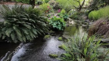 Ferns and Hostas along a Creek in Crystal Springs Garden in Portland Oregon 1080p — Stock Video
