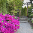 Royalty-Free Stock Photo: Pink Azaleas Blooming Along Garden Path