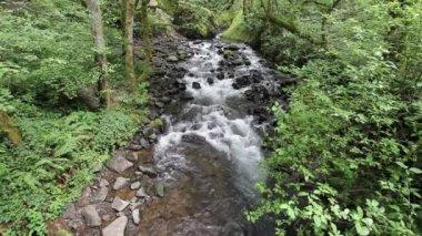 Bridal veil falls creek lungo il columbia river gorge nel multnomah county oregon 1920 x 1080 — Video Stock