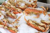 Cooked Dungeness Crabs on Ice — Stock Photo