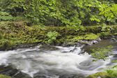 Rushing Water at Cedar Creek Washington State — Stock Photo