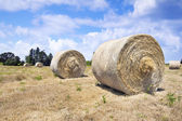 Round Bales of Hay — Stock Photo