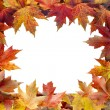 Colorful Maple Tree Fall Leaves Border — Stock Photo