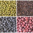 Beans and Grains Collage — Stock Photo