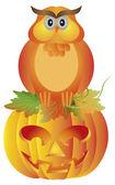 Halloween Owl Sitting on Pumpkin Illustration — Stock Vector