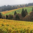 Dundee Oregon Vineyards Panorama — Stock Photo