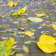 Backyard Paver Patio with Fall Leaves — Stockfoto