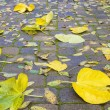 Backyard Paver Patio with Fall Leaves — Foto de Stock