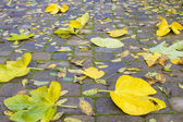 Backyard Paver Patio with Fall Leaves — Stock Photo