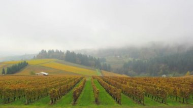 Dundee Oregon Vineyards on Rolling Hills with Morning Fog and Misty Clouds in Fall Season Scenic View Time Lapse 1920x1080 — Stock Video