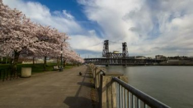 Flowering Cherry Blossom Trees Spring Season along Willamette River Waterfront in Portland Oregon 1080p — Stock Video