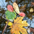 Stock Photo: Colour leaves on water