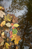 Colour leaves on water — Stock Photo