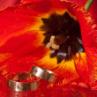Wedding rings — Stock Photo #12837310