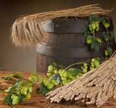 Still life with hop cones and barley — Stock Photo