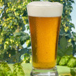 Stock Photo: Beer glass