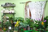 I blomsteraffär — Stockfoto