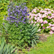 Flower bed — Stock Photo #29155423