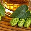 Still life with hops — Stock Photo