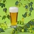 Stock Photo: Beer glass with hops