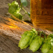 Beer and raw material for beer production — Stock Photo #30551297