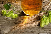 Beer and raw material for beer production — Stock Photo
