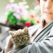 Kitten with a lady — Stock Photo