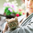 Stock Photo: Kitten with a lady