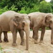 Elephants — Stock Photo #31627689