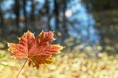 Autumn scenery — Stockfoto