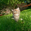 Kitten in the garden — Stock Photo