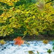 Autumn scenery — Stock Photo