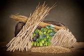 Hop cones and malt — Stock Photo