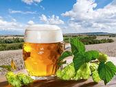 Stilleben med öl — Stockfoto