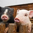 Two pigs — Stock Photo #38718301