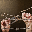 Stock Photo: Barbed wire with hands