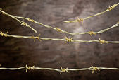 Barbed wire fence — Stock Photo