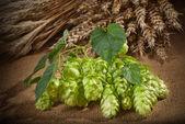 Hop Cones And Barley — Stock Photo