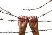 Hand behind barbed wire — Stock fotografie