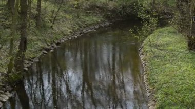 Still creek in the springtime,locked down — Stock Video
