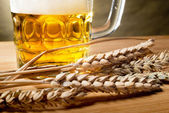 Beer and wheat — Stock Photo