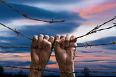 Hand behind barbed wire  — Stock Photo
