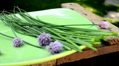 Chives in the garden — Stock Video