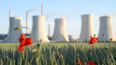 Field Poppy And Power Station — Stock Video