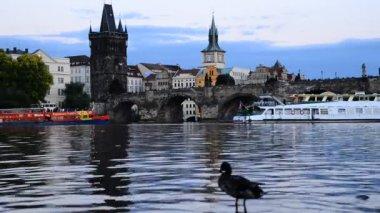 Charles Bridge And Vltava River At Dusk — Stock Video