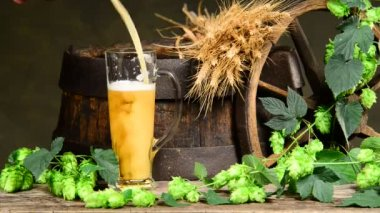 Raw material for beer production — Stock Video