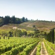 Vineyard's Hills in California — Stockfoto #22356051