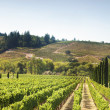 Стоковое фото: Vineyard's Hills in California